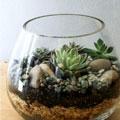 terrarium-making-promo.jpg